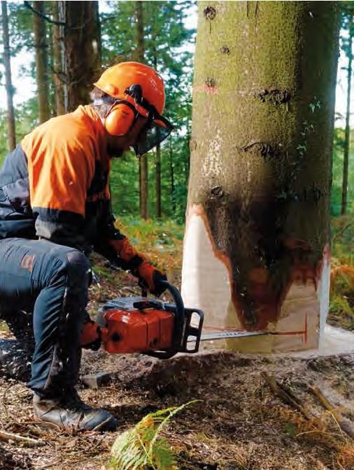 Elagage dans le 17-Abattage d'arbres-Rognage de souche