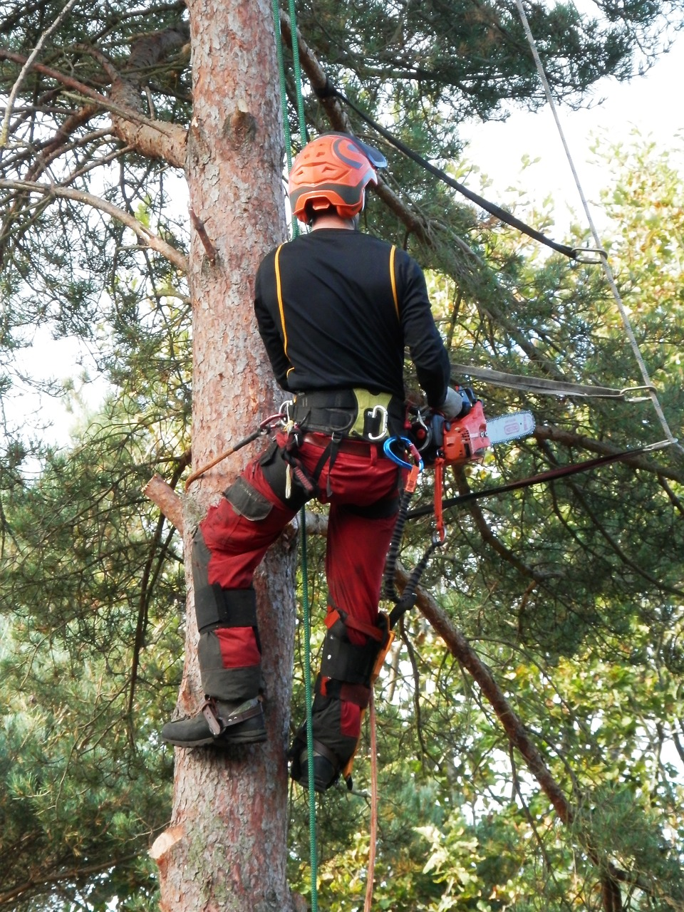 abattage arbre 17